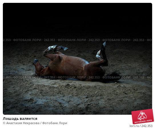 Лошадь валяется, фото № 242353, снято 22 сентября 2007 г. (c) Анастасия Некрасова / Фотобанк Лори