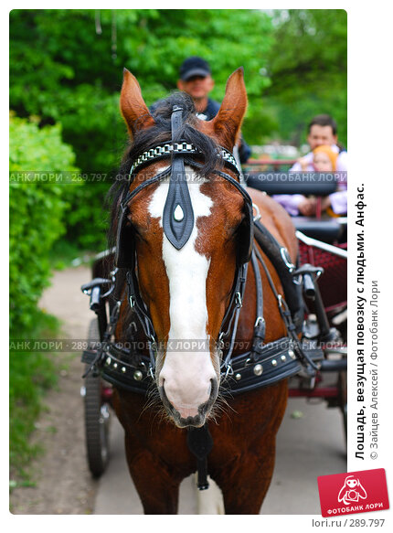 Лошадь, везущая повозку с людьми. Анфас., фото № 289797, снято 18 мая 2008 г. (c) Зайцев Алексей / Фотобанк Лори