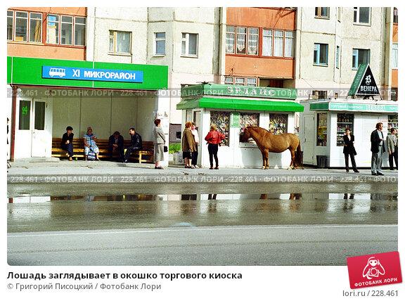 Лошадь заглядывает в окошко торгового киоска, эксклюзивное фото № 228461, снято 22 октября 2016 г. (c) Григорий Писоцкий / Фотобанк Лори