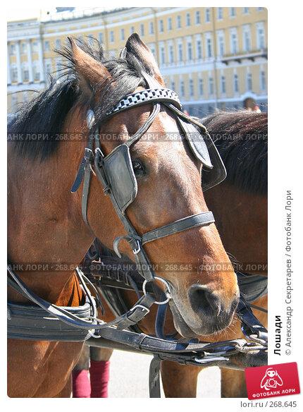 Купить «Лошади», фото № 268645, снято 28 июня 2005 г. (c) Александр Секретарев / Фотобанк Лори