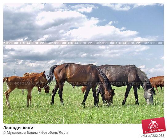 Купить «Лошади, кони», фото № 282053, снято 19 апреля 2018 г. (c) Мударисов Вадим / Фотобанк Лори