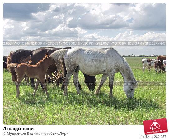 Лошади, кони, фото № 282057, снято 24 января 2017 г. (c) Мударисов Вадим / Фотобанк Лори