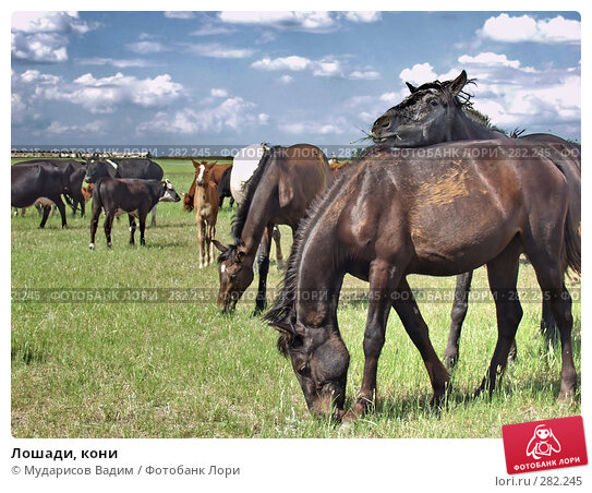Лошади, кони, фото № 282245, снято 25 мая 2017 г. (c) Мударисов Вадим / Фотобанк Лори