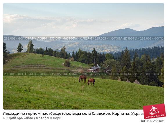 Лошади на горном пастбище (околицы села Славское, Карпаты, Украина), фото № 235005, снято 2 сентября 2007 г. (c) Юрий Брыкайло / Фотобанк Лори