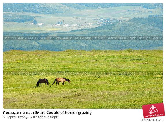 Лошади на пастбище Couple of horses grazing, фото № 311513, снято 4 июня 2008 г. (c) Сергей Старуш / Фотобанк Лори
