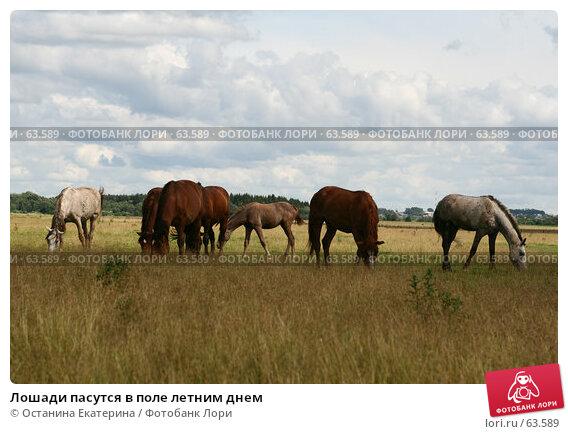 Лошади пасутся в поле летним днем, фото № 63589, снято 9 июля 2007 г. (c) Останина Екатерина / Фотобанк Лори