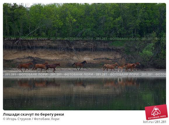 Лошади скачут по берегу реки, фото № 281281, снято 1 мая 2008 г. (c) Игорь Струков / Фотобанк Лори