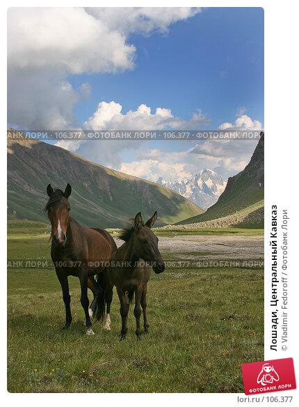 Лошади, Центральный Кавказ, фото № 106377, снято 21 июля 2007 г. (c) Vladimir Fedoroff / Фотобанк Лори