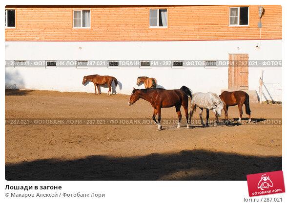 Лошади в загоне, фото № 287021, снято 11 мая 2008 г. (c) Макаров Алексей / Фотобанк Лори