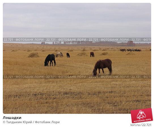 Лошадки, фото № 22721, снято 16 октября 2006 г. (c) Талдыкин Юрий / Фотобанк Лори
