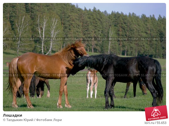 Лошадки, фото № 55653, снято 27 октября 2016 г. (c) Талдыкин Юрий / Фотобанк Лори