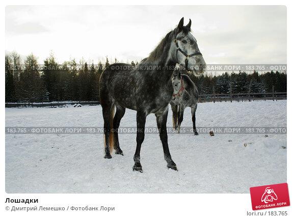 Купить «Лошадки», фото № 183765, снято 19 января 2008 г. (c) Дмитрий Лемешко / Фотобанк Лори