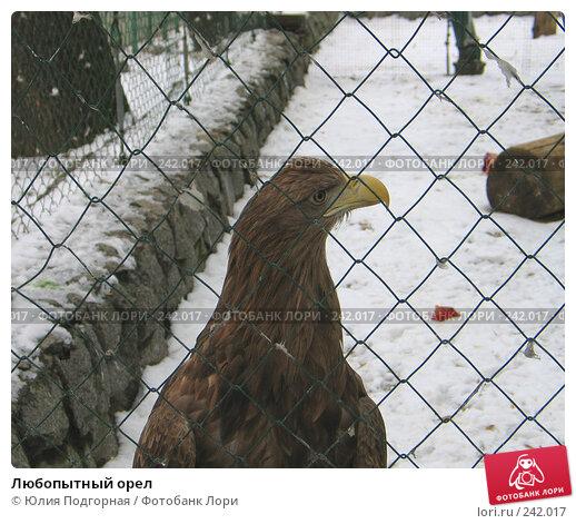 Любопытный орел, фото № 242017, снято 8 марта 2008 г. (c) Юлия Селезнева / Фотобанк Лори