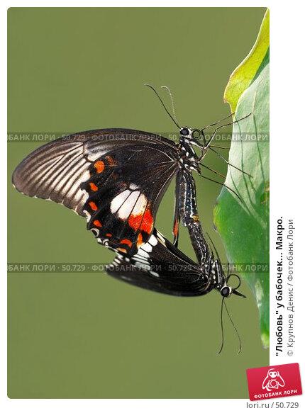 """Купить «""""Любовь"""" у бабочек... Макро.», фото № 50729, снято 7 мая 2007 г. (c) Крупнов Денис / Фотобанк Лори"""
