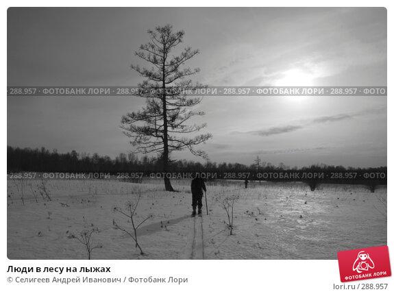 Люди в лесу на лыжах, фото № 288957, снято 22 марта 2008 г. (c) Селигеев Андрей Иванович / Фотобанк Лори