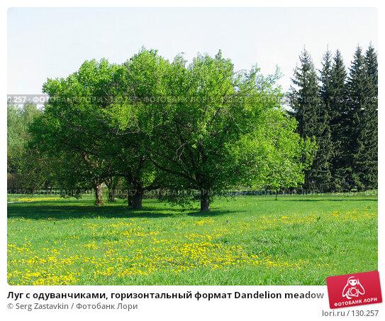 Луг с одуванчиками, горизонтальный формат Dandelion meadow, фото № 130257, снято 20 мая 2005 г. (c) Serg Zastavkin / Фотобанк Лори