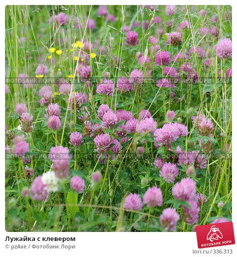 Лужайка с клевером, фото № 336313, снято 8 июля 2006 г. (c) pzAxe / Фотобанк Лори