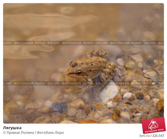 Лягушка, фото № 326541, снято 12 сентября 2006 г. (c) Примак Полина / Фотобанк Лори