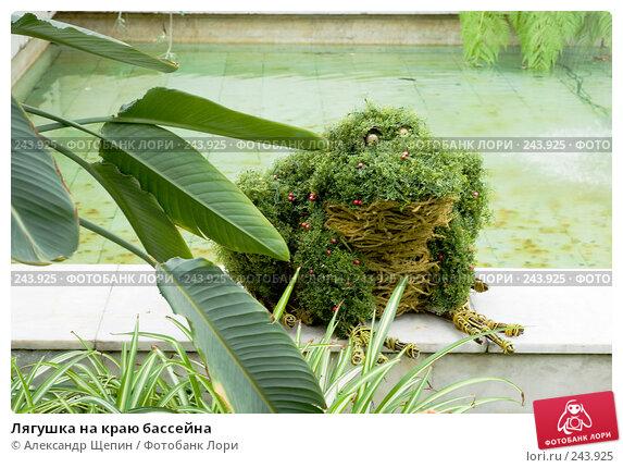 Купить «Лягушка на краю бассейна», эксклюзивное фото № 243925, снято 6 апреля 2008 г. (c) Александр Щепин / Фотобанк Лори
