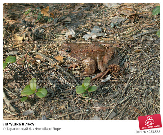 Купить «Лягушка в лесу», фото № 233585, снято 1 мая 2006 г. (c) Тарановский Д. / Фотобанк Лори