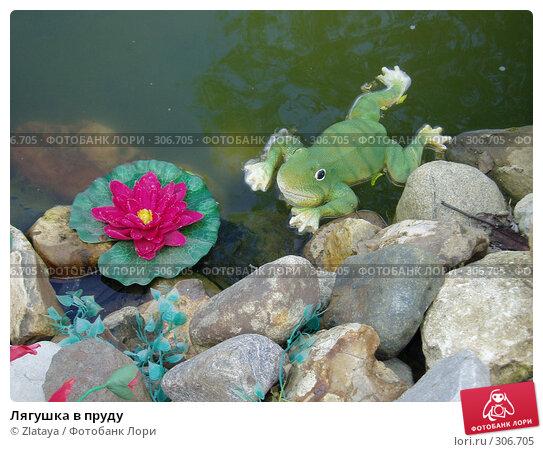 Лягушка в пруду, фото № 306705, снято 21 августа 2017 г. (c) Zlataya / Фотобанк Лори