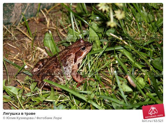 Лягушка в траве, фото № 63521, снято 14 июля 2007 г. (c) Юлия Кузнецова / Фотобанк Лори