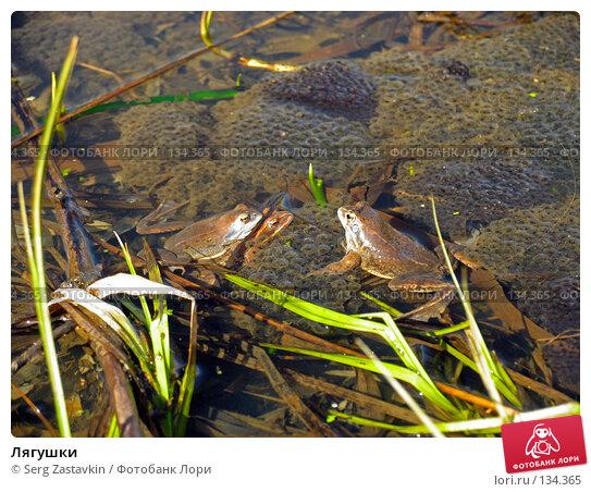 Лягушки, фото № 134365, снято 13 мая 2004 г. (c) Serg Zastavkin / Фотобанк Лори