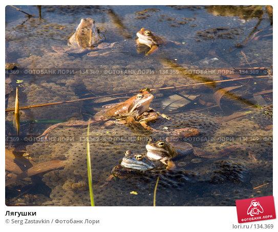 Лягушки, фото № 134369, снято 14 мая 2004 г. (c) Serg Zastavkin / Фотобанк Лори