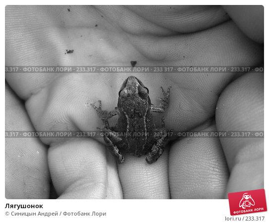 Купить «Лягушонок», фото № 233317, снято 10 сентября 2005 г. (c) Синицын Андрей / Фотобанк Лори