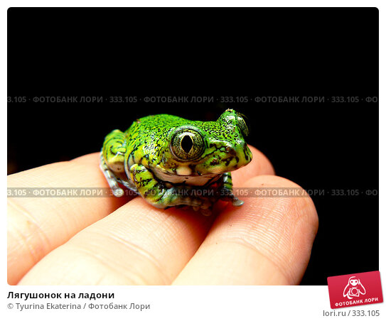 Лягушонок на ладони, фото № 333105, снято 18 февраля 2007 г. (c) Tyurina Ekaterina / Фотобанк Лори