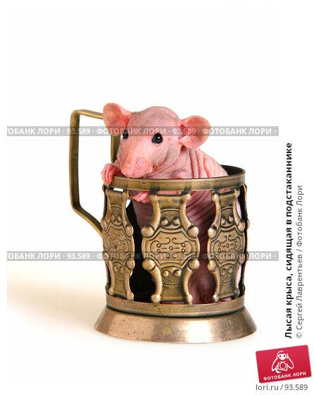 Купить «Лысая крыса, сидящая в подстаканнике», фото № 93589, снято 23 сентября 2007 г. (c) Сергей Лаврентьев / Фотобанк Лори