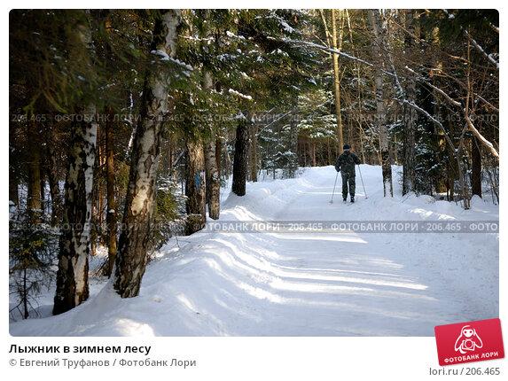 Купить «Лыжник в зимнем лесу», фото № 206465, снято 21 февраля 2008 г. (c) Евгений Труфанов / Фотобанк Лори