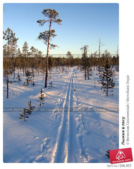 Купить «Лыжня в лесу», фото № 206957, снято 9 февраля 2008 г. (c) Вячеслав Смоленский / Фотобанк Лори