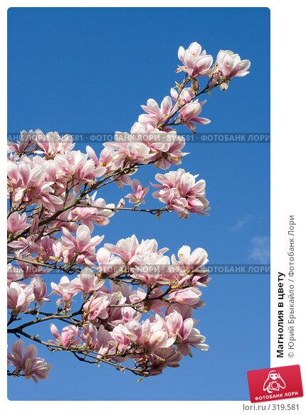 Магнолия в цвету, фото № 319581, снято 26 апреля 2008 г. (c) Юрий Брыкайло / Фотобанк Лори