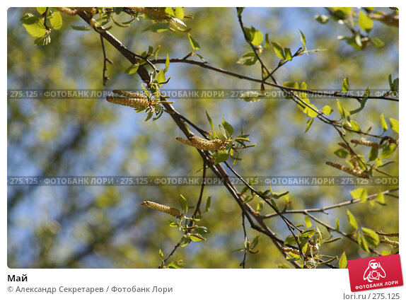 Май, фото № 275125, снято 13 мая 2007 г. (c) Александр Секретарев / Фотобанк Лори