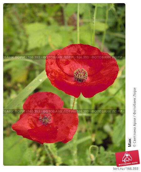 Мак, фото № 166393, снято 21 августа 2005 г. (c) Светлана Архи / Фотобанк Лори
