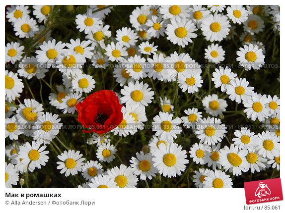 Мак в ромашках, фото № 85061, снято 19 мая 2007 г. (c) Alla Andersen / Фотобанк Лори