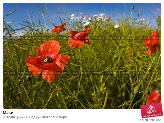 Маки, фото № 285653, снято 2 июля 2005 г. (c) Кравецкий Геннадий / Фотобанк Лори