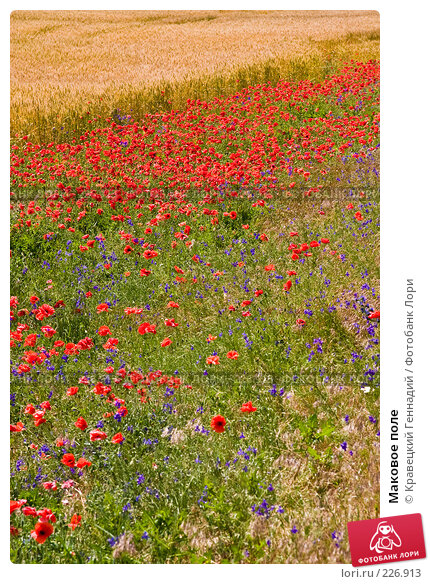 Маковое поле, фото № 226913, снято 30 июня 2004 г. (c) Кравецкий Геннадий / Фотобанк Лори