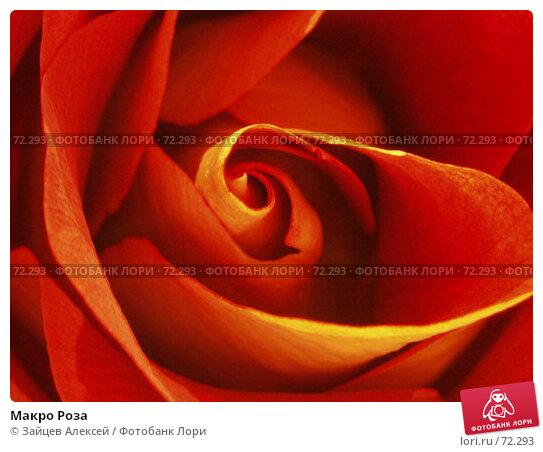 Макро Роза, фото № 72293, снято 5 апреля 2006 г. (c) Зайцев Алексей / Фотобанк Лори