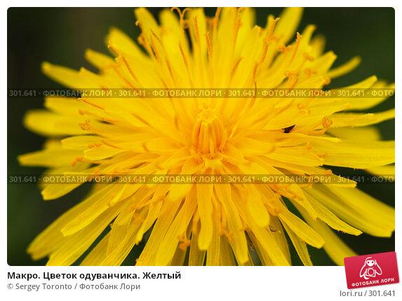 Макро. Цветок одуванчика. Желтый, фото № 301641, снято 11 мая 2008 г. (c) Sergey Toronto / Фотобанк Лори