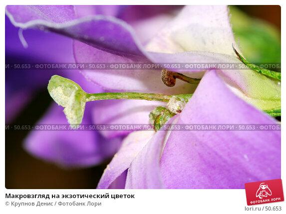 Макровзгляд на экзотический цветок, фото № 50653, снято 7 мая 2007 г. (c) Крупнов Денис / Фотобанк Лори