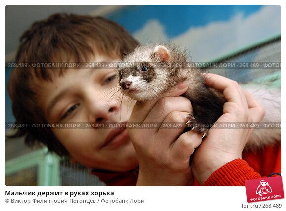 Мальчик держит в руках хорька, фото № 268489, снято 22 января 2006 г. (c) Виктор Филиппович Погонцев / Фотобанк Лори