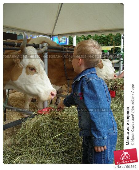 Мальчик и корова, фото № 66569, снято 20 июня 2006 г. (c) Илья Садовский / Фотобанк Лори