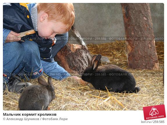 Мальчик кормит кроликов, фото № 259585, снято 16 августа 2007 г. (c) Александр Шуников / Фотобанк Лори