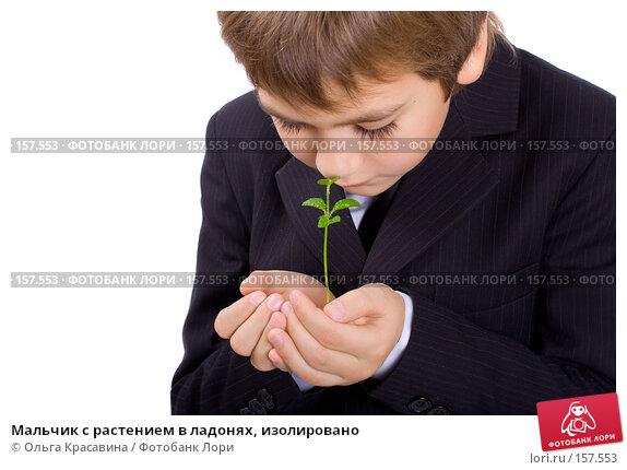 Мальчик с растением в ладонях, изолировано, фото № 157553, снято 21 октября 2007 г. (c) Ольга Красавина / Фотобанк Лори