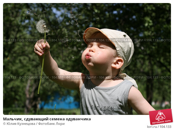 Купить «Мальчик, сдувающий семена одуванчика», фото № 104133, снято 22 ноября 2017 г. (c) Юлия Кузнецова / Фотобанк Лори