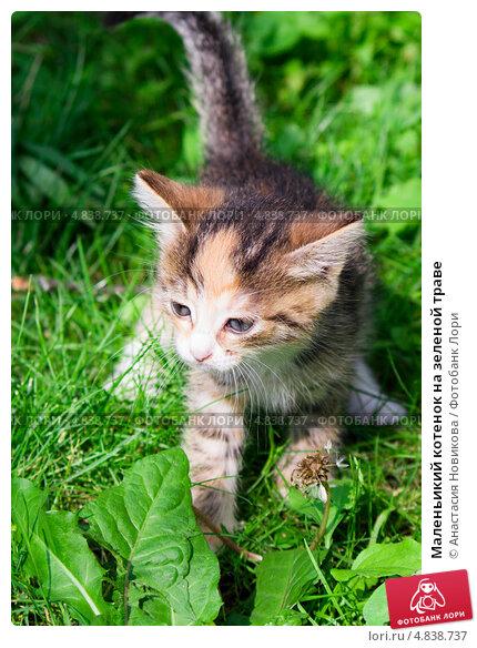 Маленьикий котенок на зеленой траве. Стоковое фото, фотограф Анастасия Новикова / Фотобанк Лори
