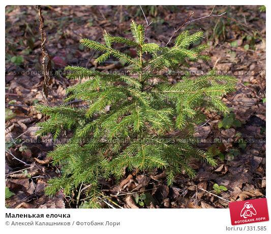 Маленькая елочка, фото № 331585, снято 18 марта 2007 г. (c) Алексей Калашников / Фотобанк Лори