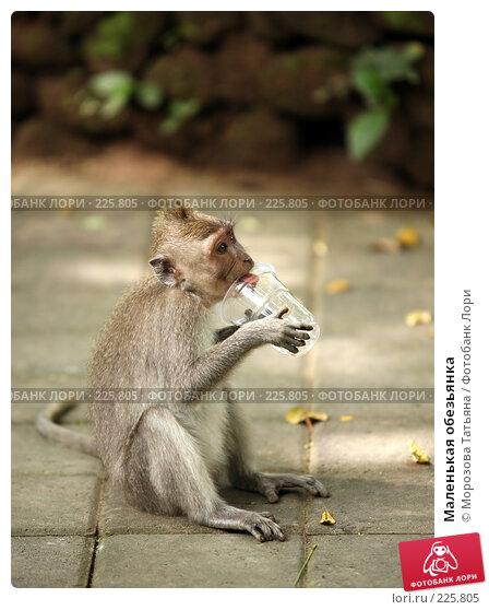 Маленькая обезьянка, фото № 225805, снято 24 февраля 2008 г. (c) Морозова Татьяна / Фотобанк Лори